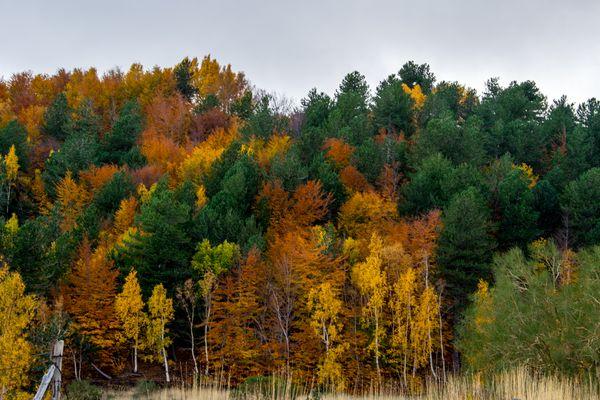 Colori caldi dell'autunno