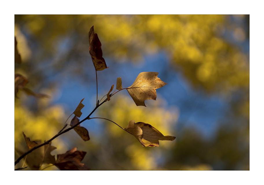 Colori dell autunno III