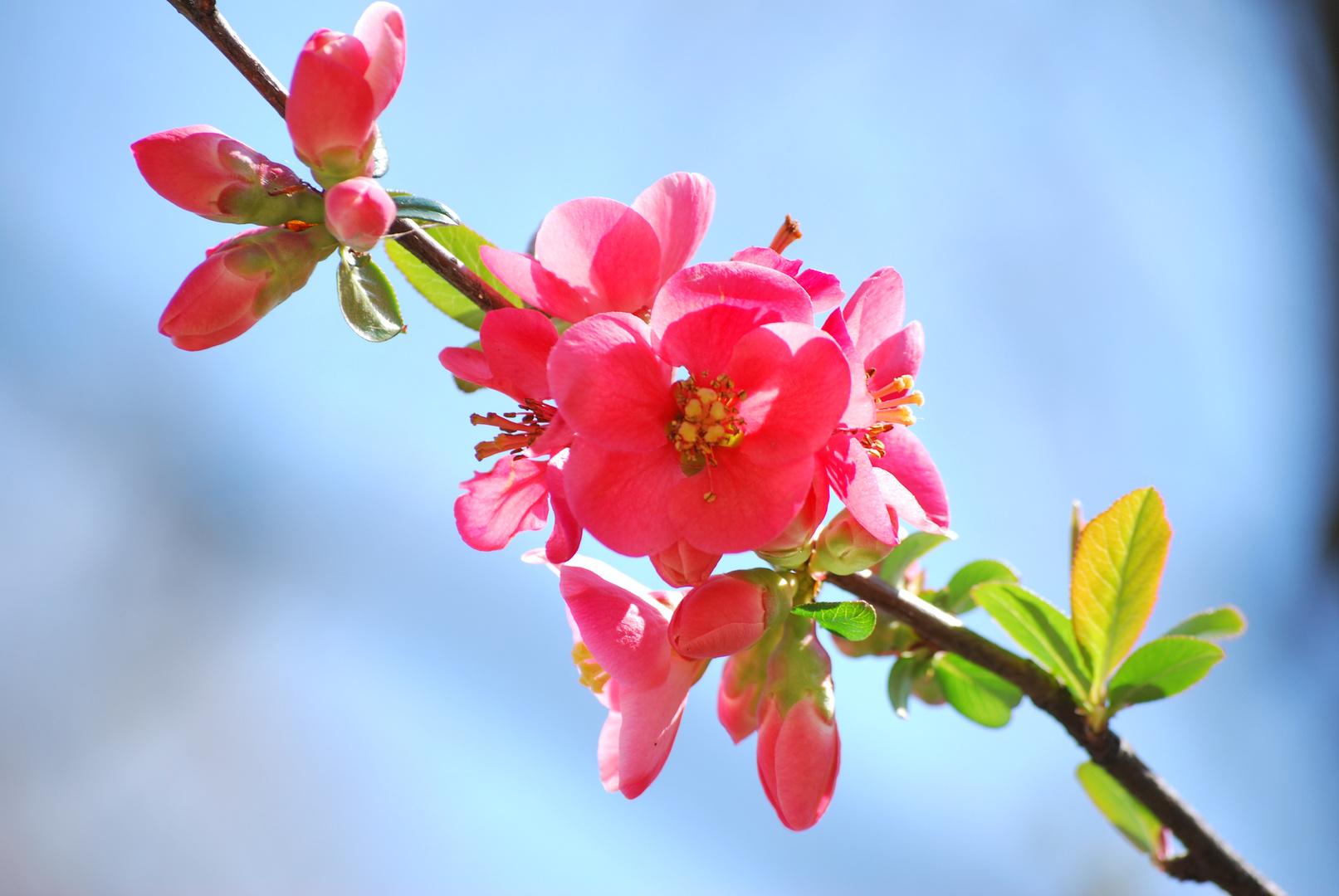 Colori di primavera foto immagini macro e close up for Fiori di primavera