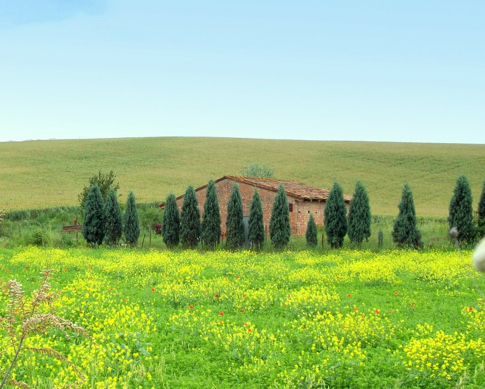 Colori di toscana foto immagini paesaggi campagna for Disegni di cabina di campagna