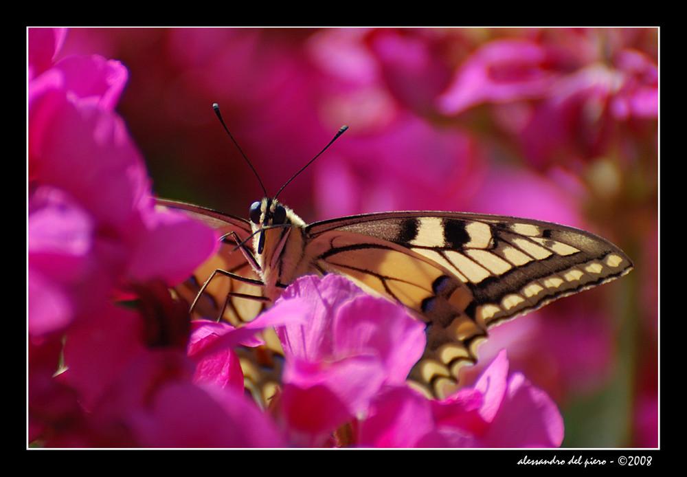 colori e sapori di primavera