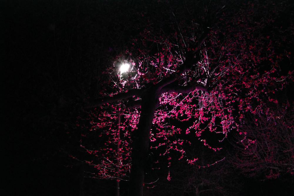 Colori notturni........