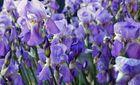 colori .......primavera