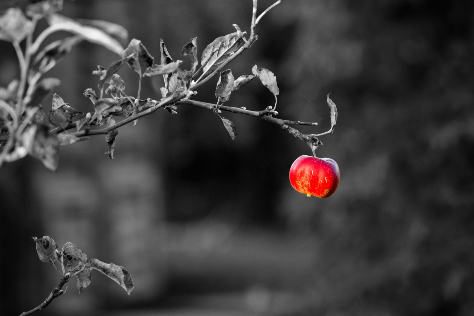 colorkey Apfel
