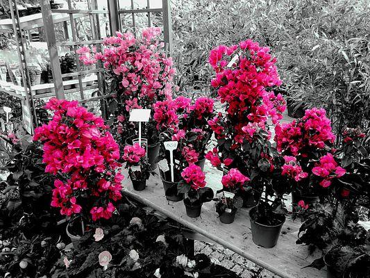 Colorkey Kölner Blumenmarkt
