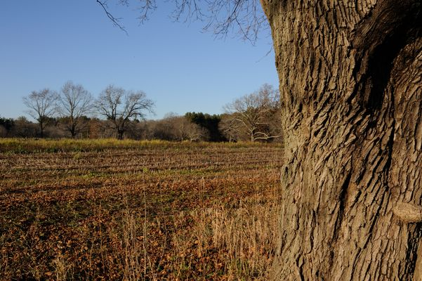 Colors of Late Fall - Appleton Farm, Massachusetts