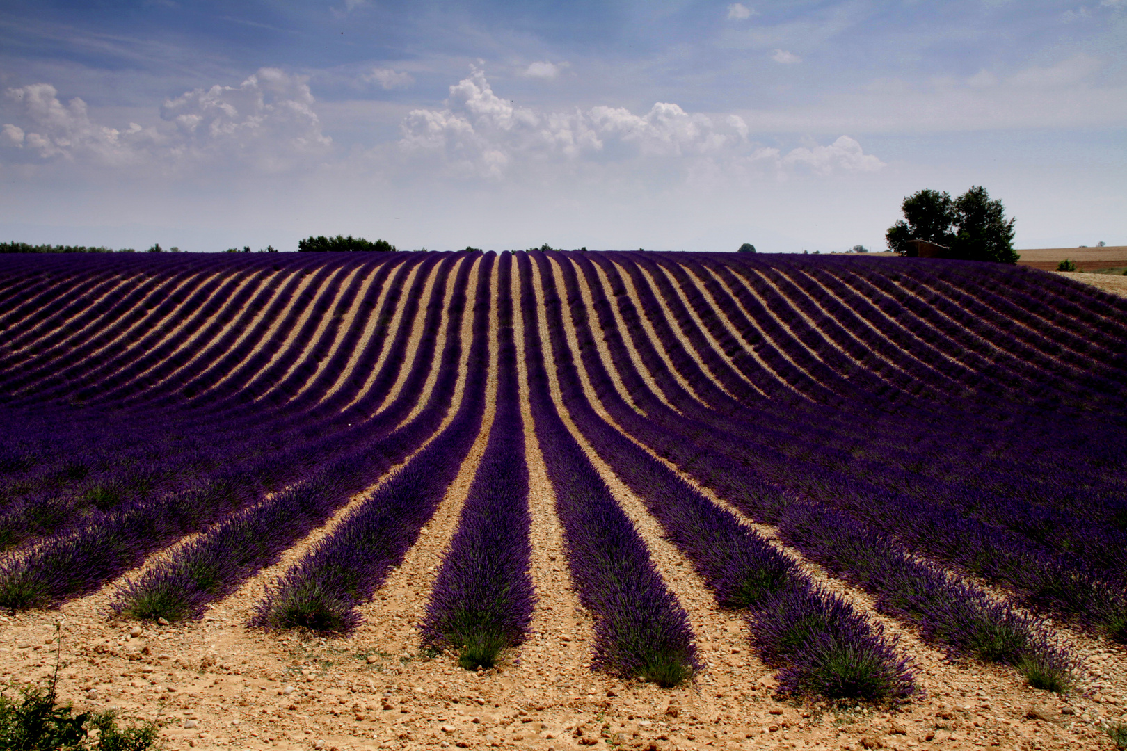 Colors of Provence 3