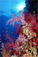 ~ colour your life ~