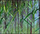 Coloured Grass