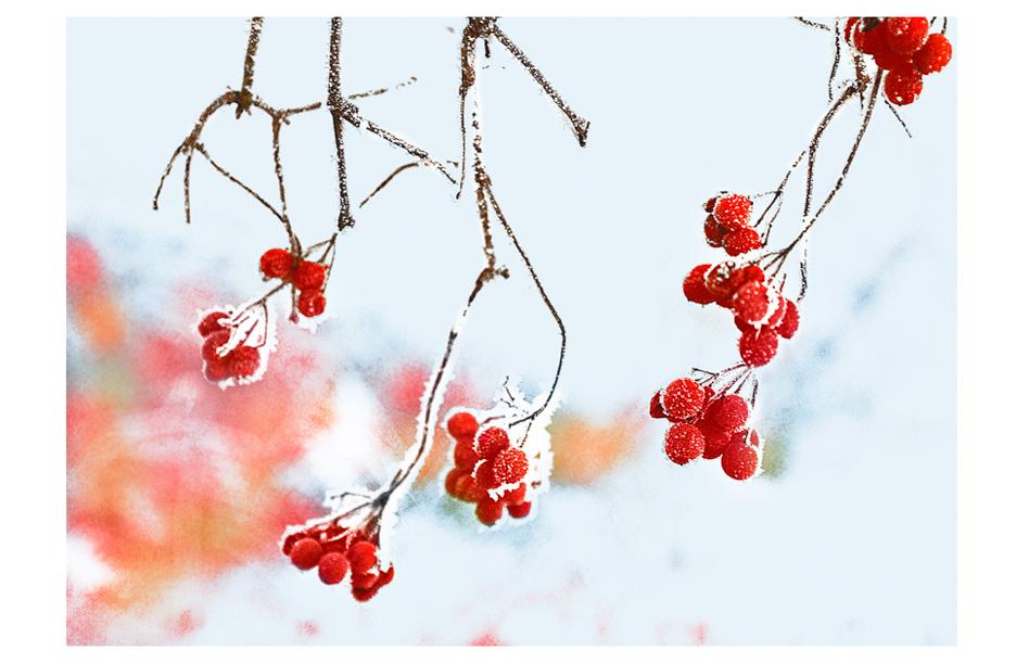 coloured winter