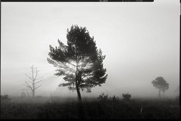 colourless • lands 11.0