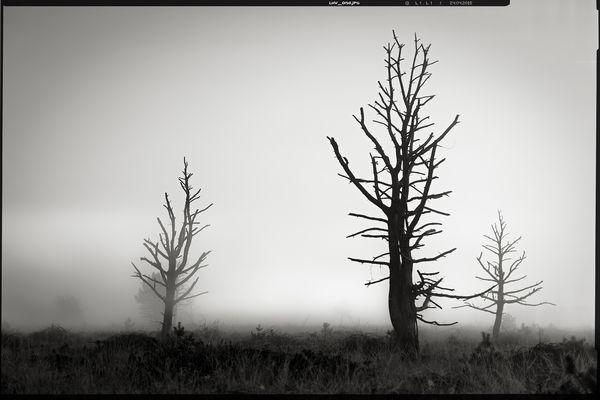 colourless • lands 12.0