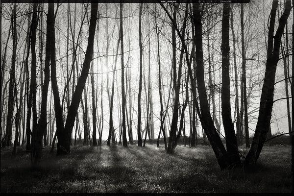colourless • lands 15.0