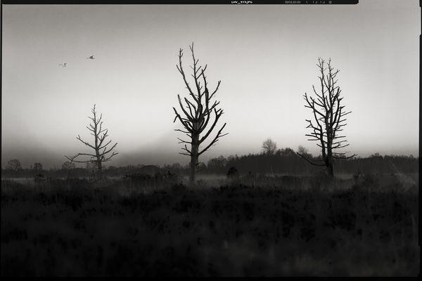 colourless • lands 4.0