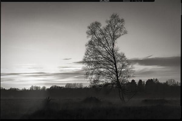 colourless • lands 5.0