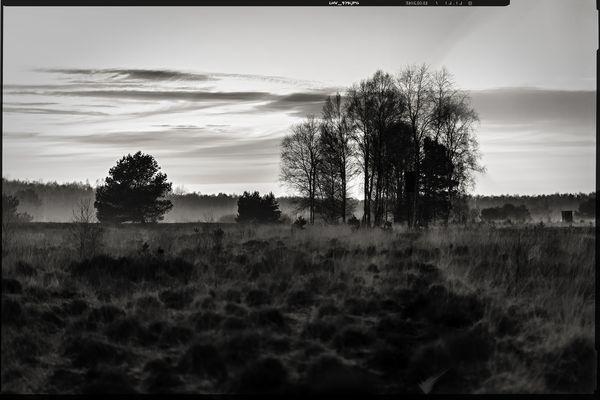 colourless • lands 6.0