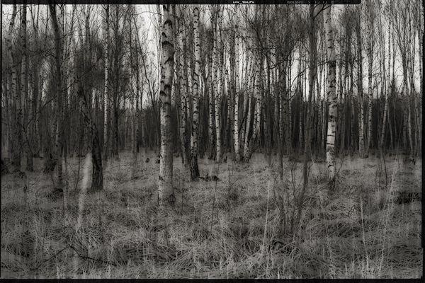 colourless • lands 7.0