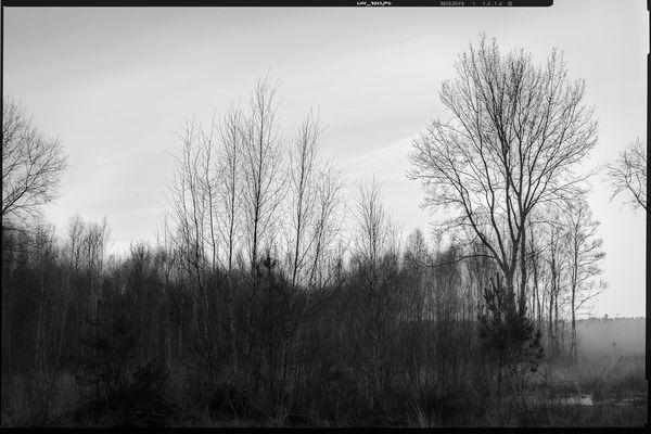 colourless • lands 8.0