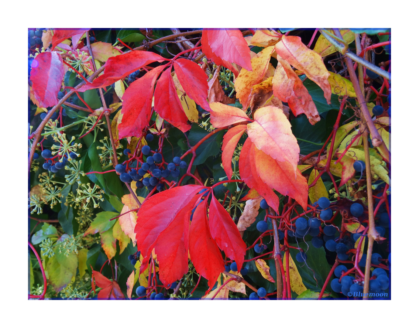 Colours of October