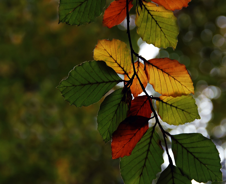Colours of September