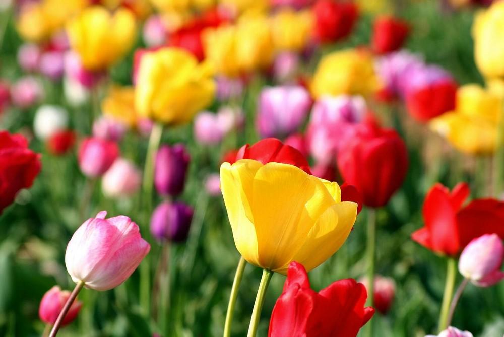 Colours of spring No. 3