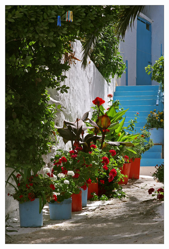 . . . colours of summer . . .