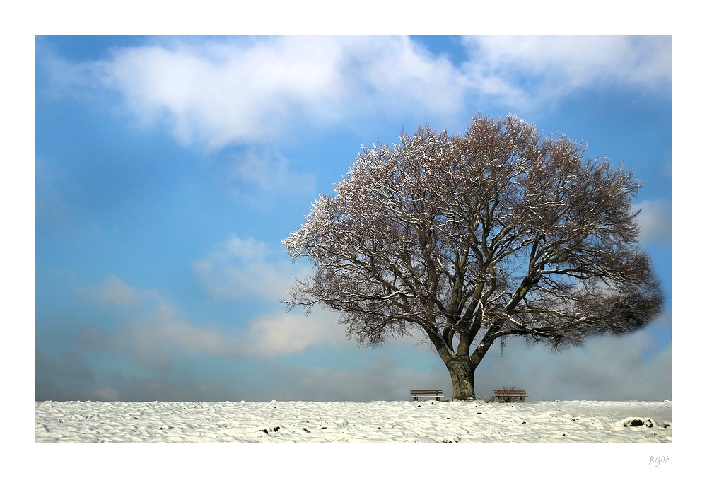 """""""Colours of Winter"""""""