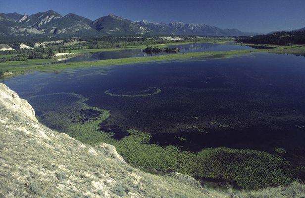 Columbia Wetlands, British Columbia