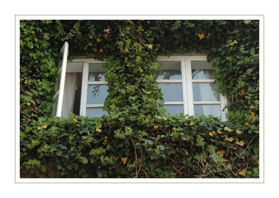 Come to my Window III