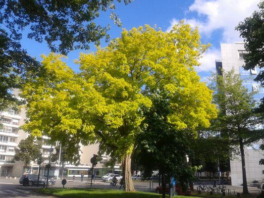comme un arbre dans la ville