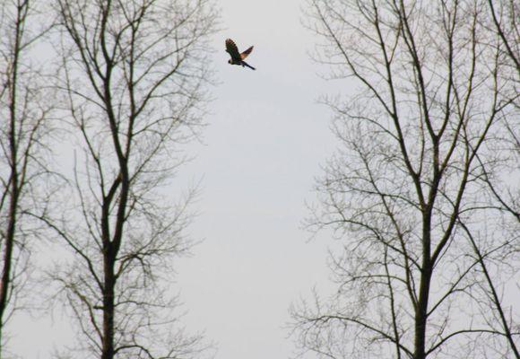 comme un oiseau