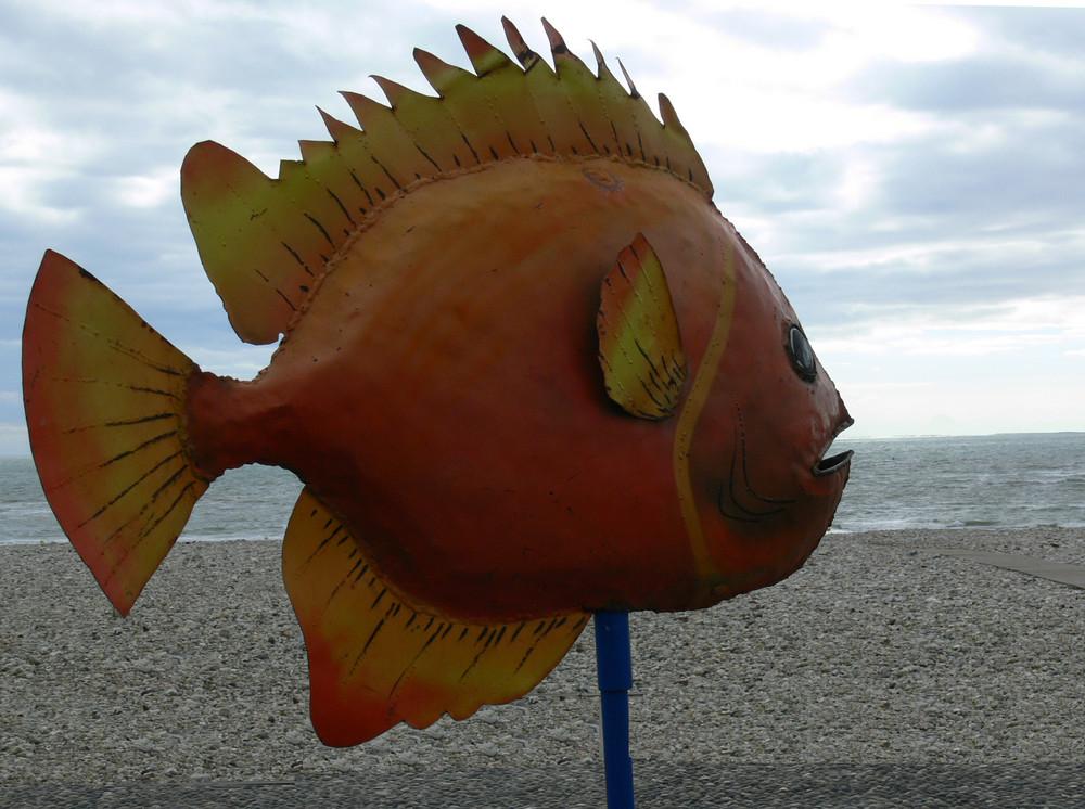 Comme un poisson dans l'eau ......(bientôt, la mer monte )