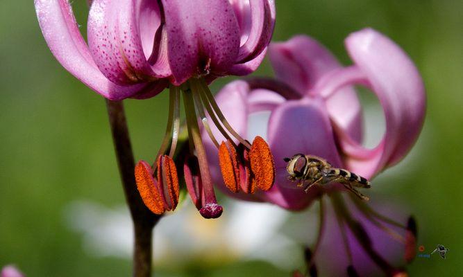 Comment faire une photo de fleur sauvage sans bestiole ?