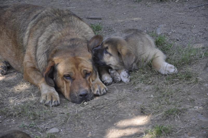Compaañeiros: nai e fillo