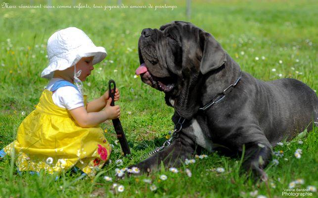 Complicité entre un chien et son jeune maitre..