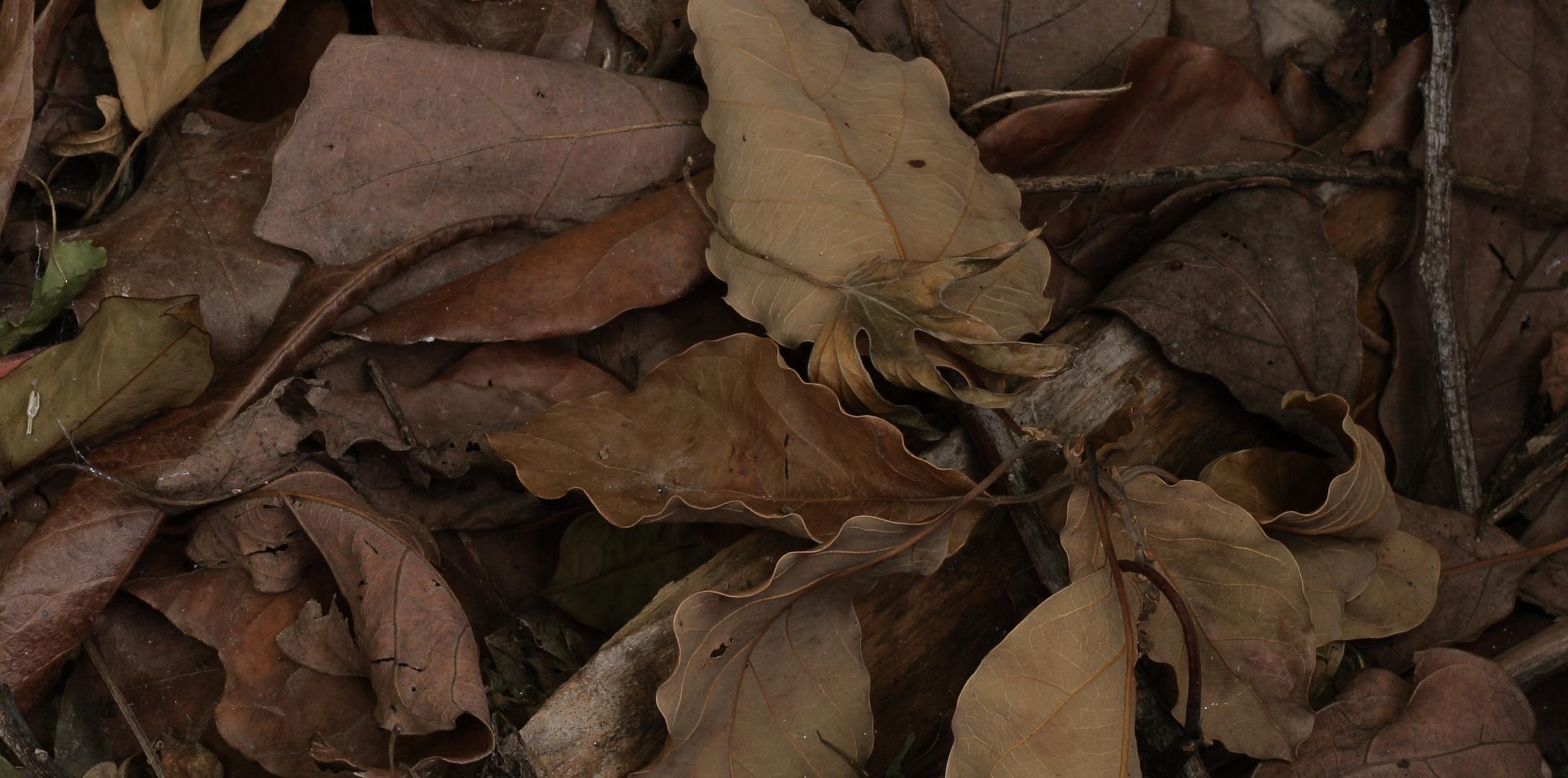 componiendo con el sr. otoño