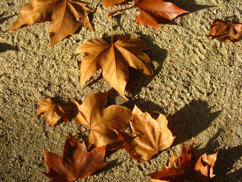 Composición natural de otoño