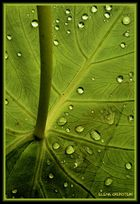 Composición vegetal ( Vegetal composition )