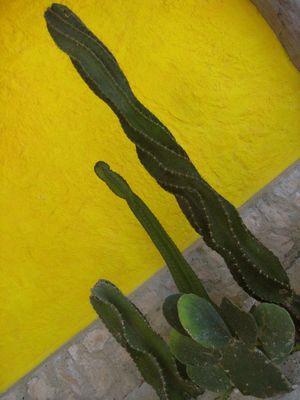 Composition de cactus