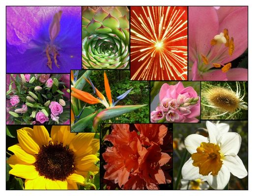 Composition florale (photo-montage)