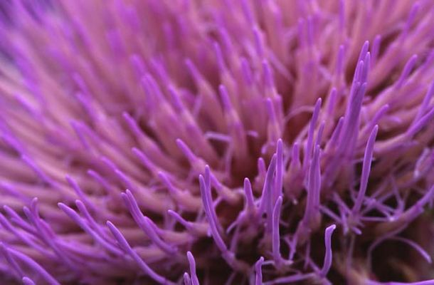 Composition in violet
