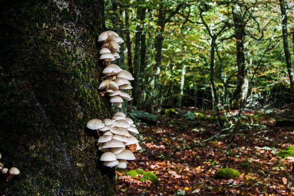 Con el otoño el bosque recobra la magia de las setas
