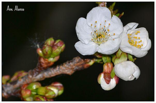 Con la primavera