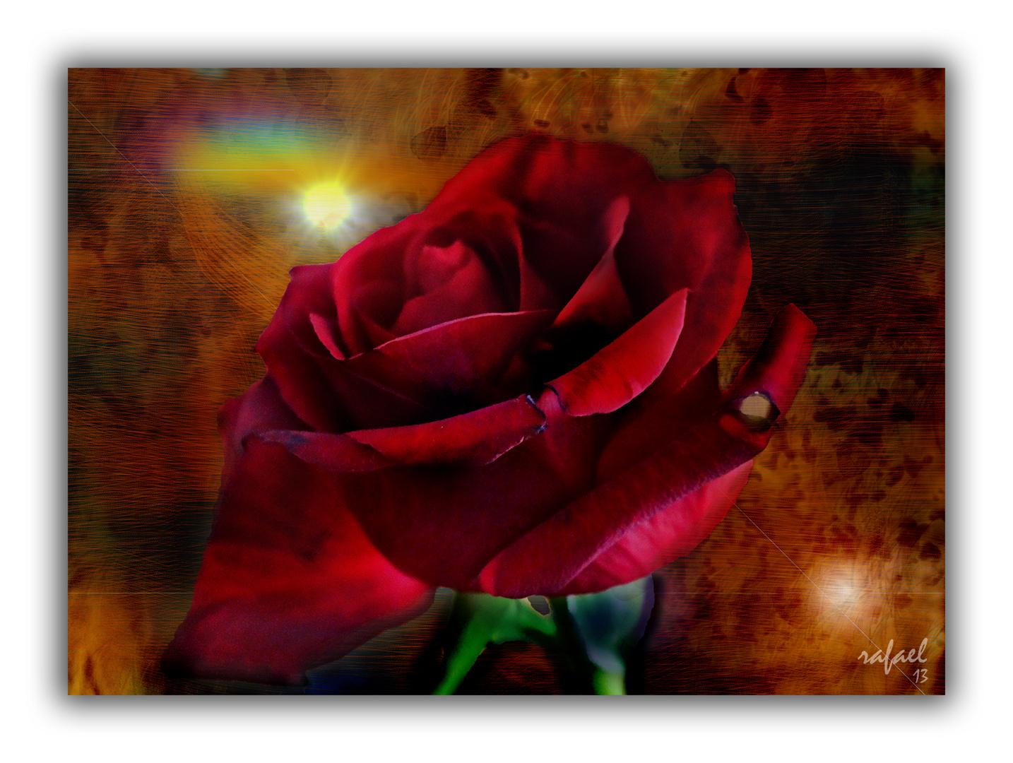 Con las rosas