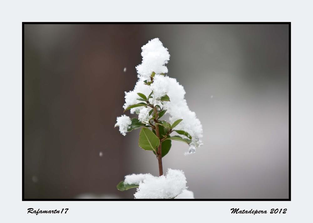 Con nieve encima