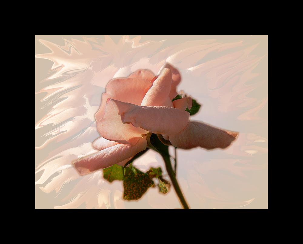 Con una rosa....