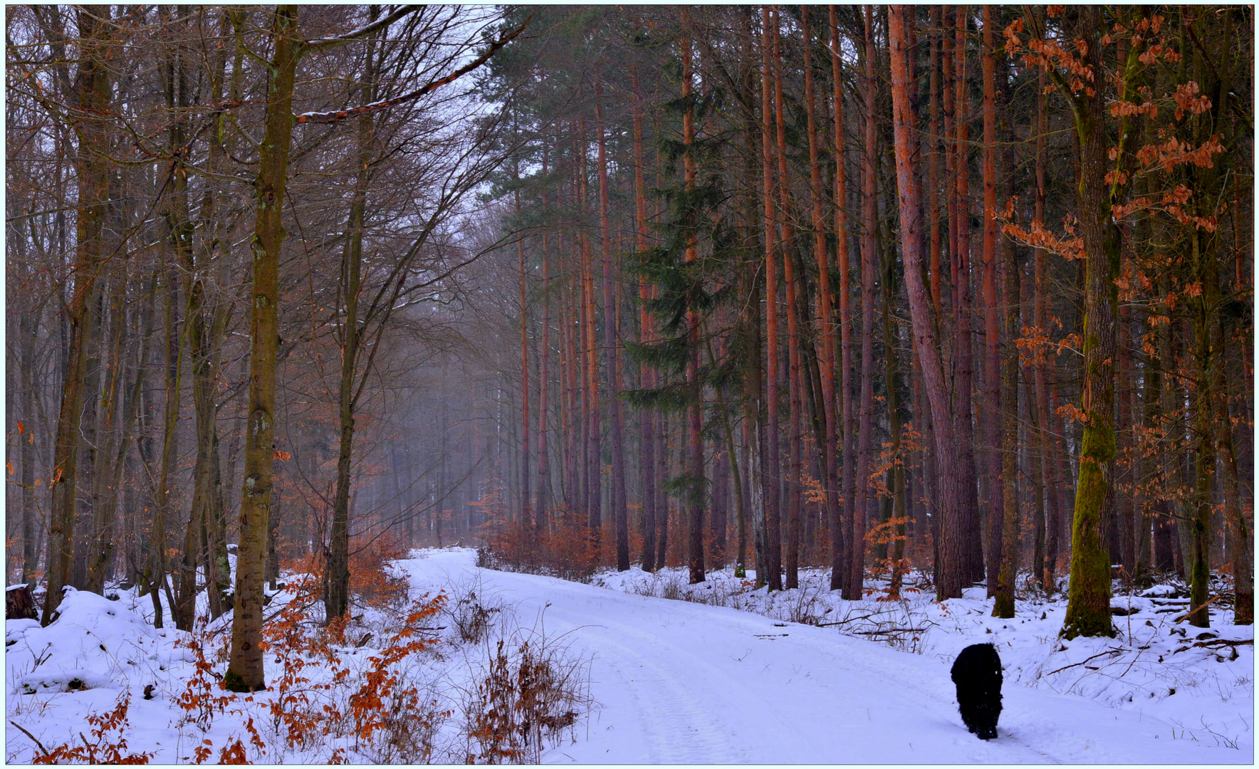 Con Wicky-Emily en el bosque otra vez (Mit Wicky-Emily wieder mal im Wald)