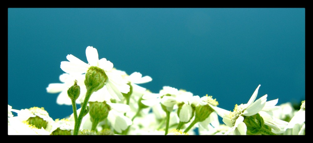 Concerto floreale