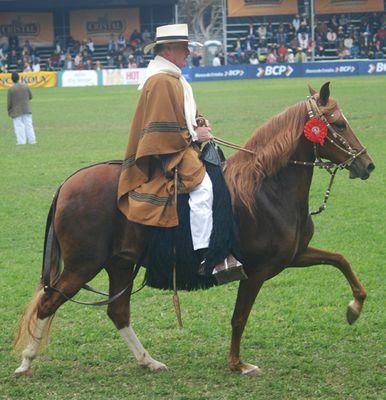 Concurso de caballos de paso Peruano.