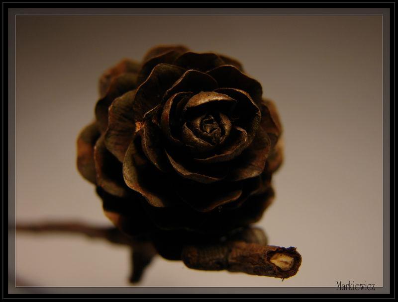 cone, pinecone